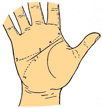 head line variations palmistry